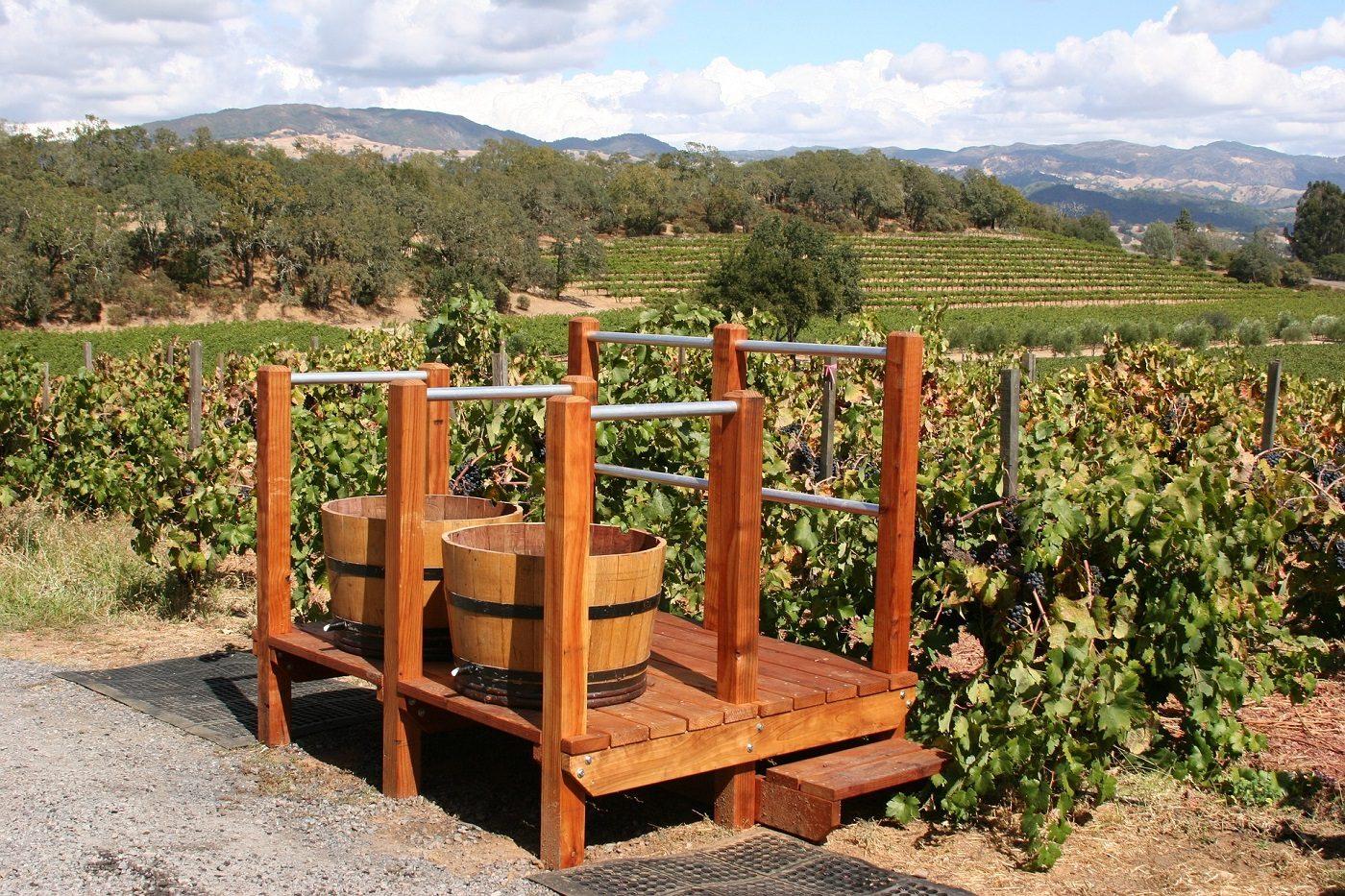 drewniane stągwie na winogrona na tle winnicy w terenie pagórkowatym