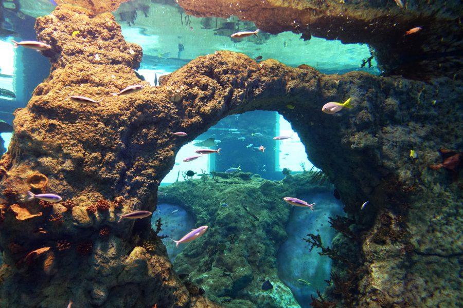 afrykarium morze czerwone