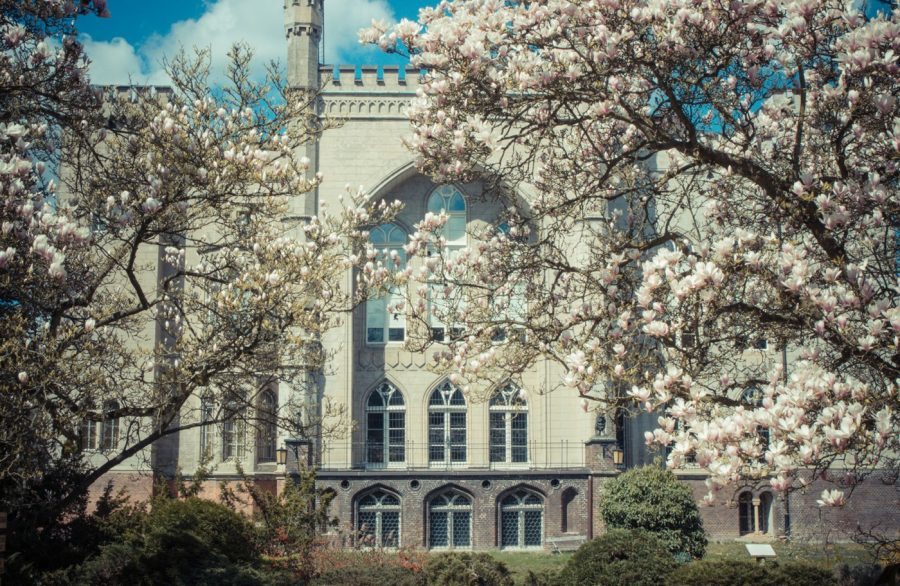 Zamek Kórnik wiosna w zamku Kórnik