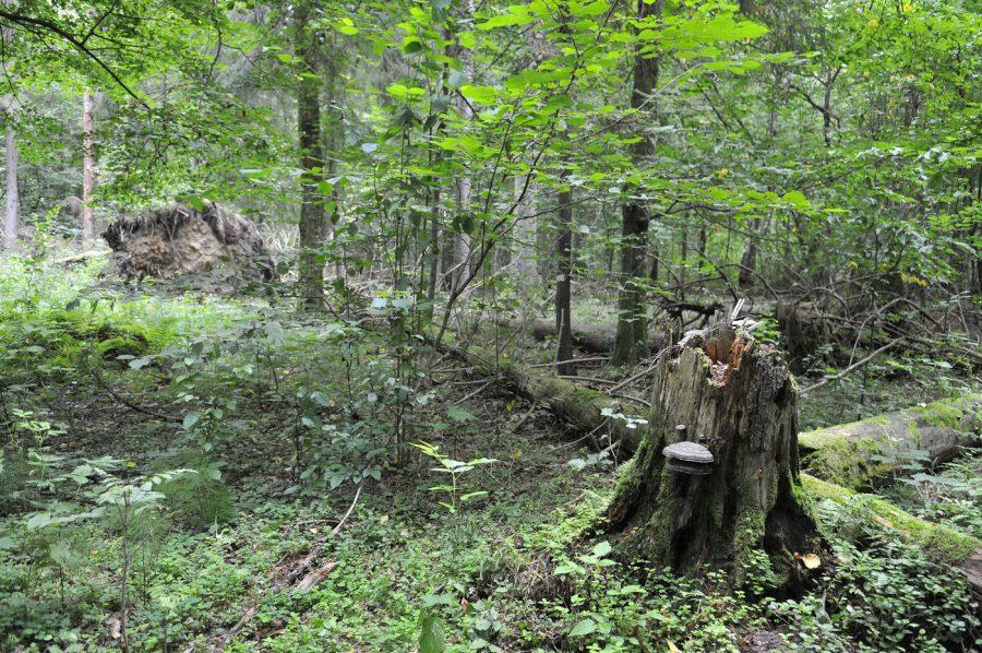 podlaski szlak bociani puszcza białowieska