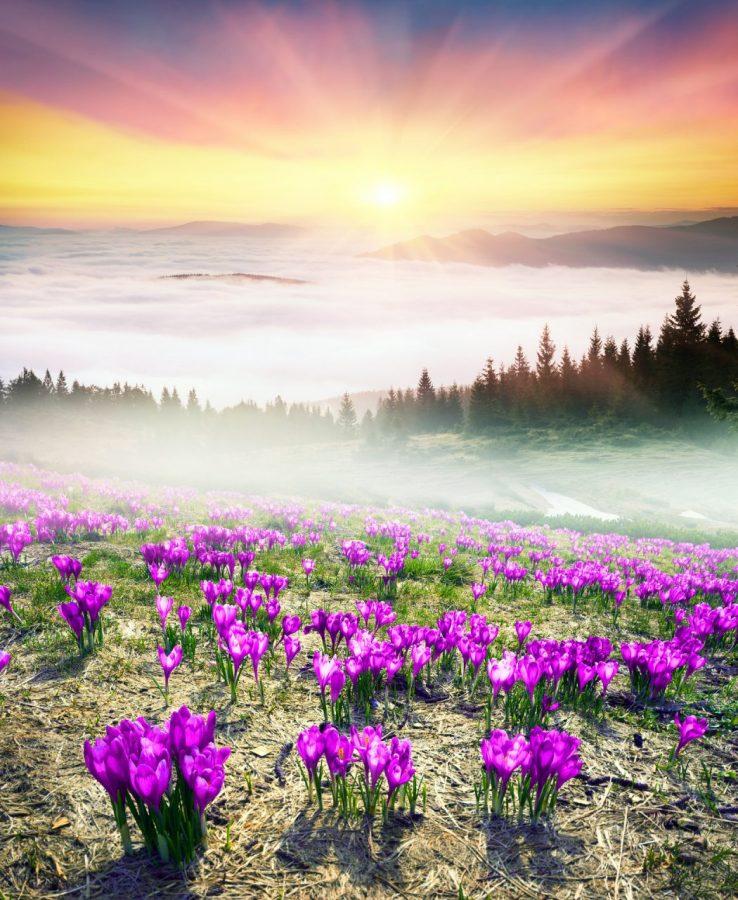 wiosna karpaty