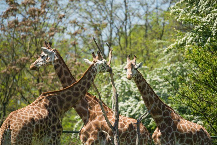 wielkopolskie atrakcje Zoo w Poznaniu