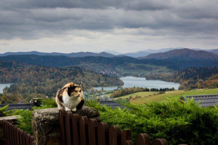 kot w polańczyku bieszczady