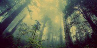 ciemny mroczny tajemniczy las