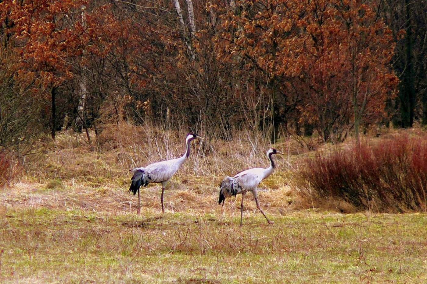 kampinoski park narodowy puszcza kampinoska