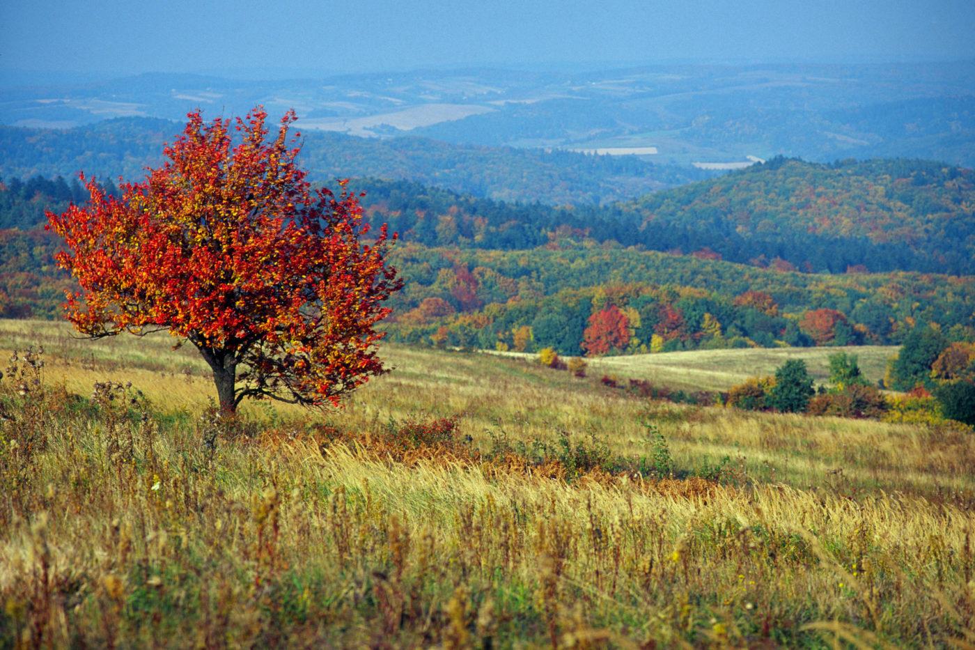 Pogórze Przemyskie i Park Krajobrazowy Gór Słonnych – zakątki warte odkrycia