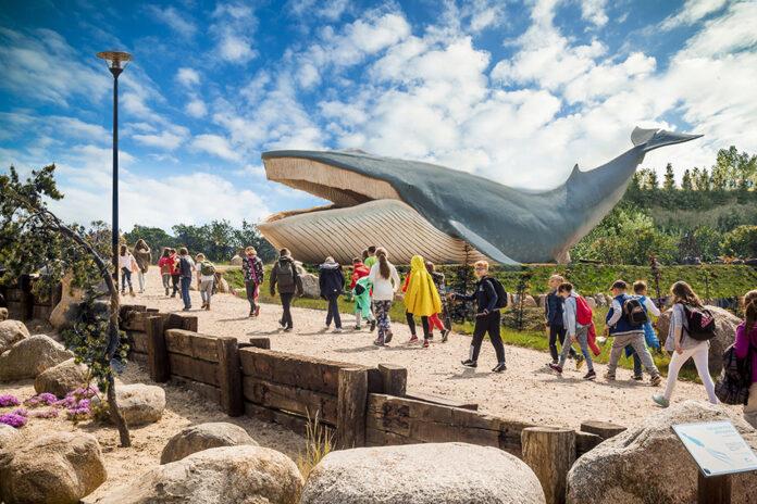 Wieloryb w skali 1:1. Ocean Park Władysławowo