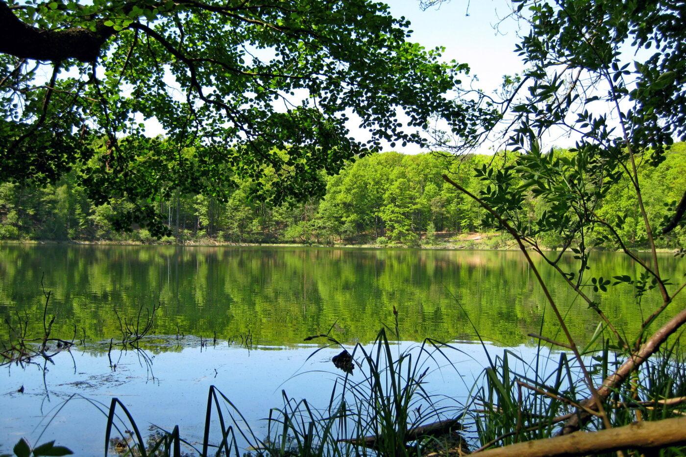 Jezioro Kociołek w Wielkopolskim Parku Narodowym