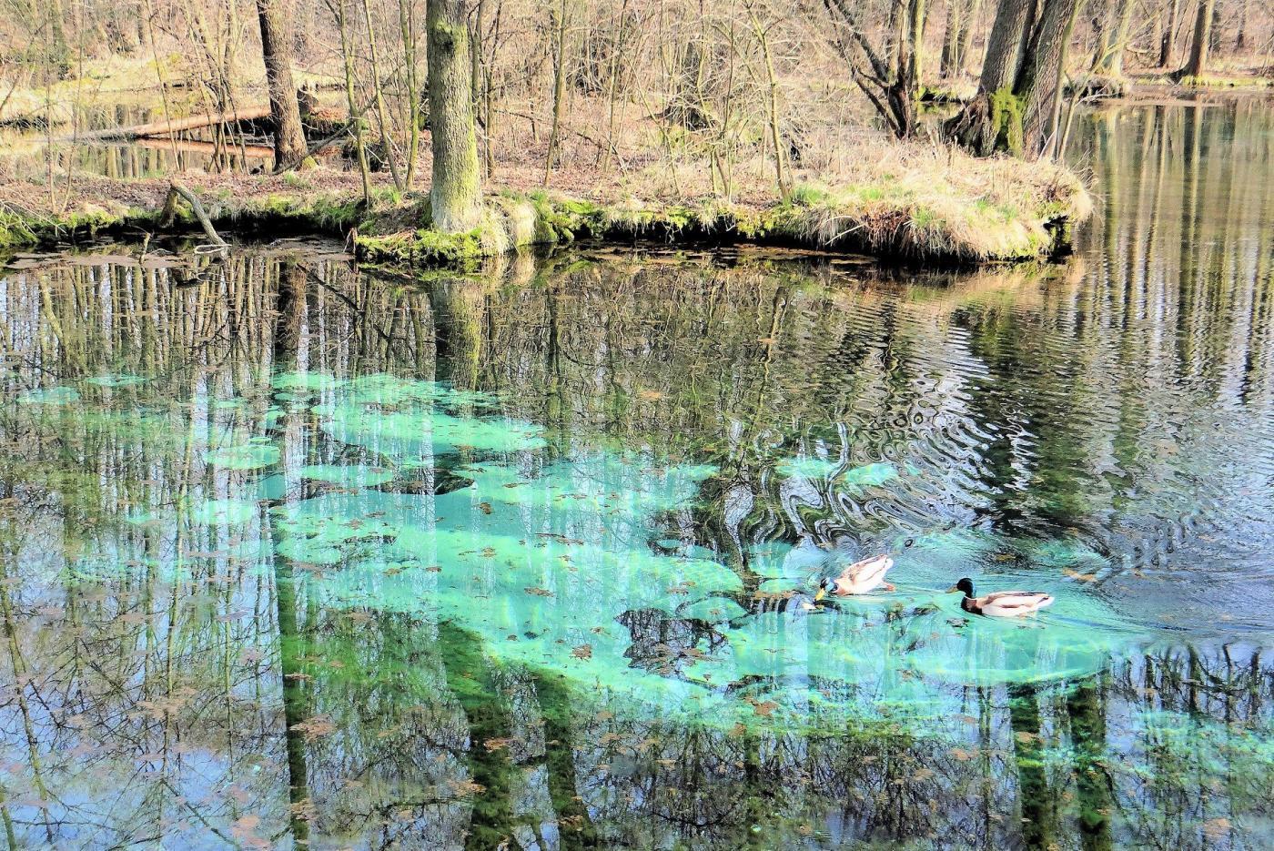 niebieskie źródła